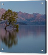 That Tree - Wanaka Acrylic Print