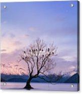 That Wanaka Tree Acrylic Print