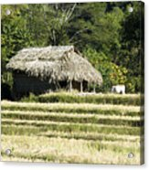 Thatched Shelter Acrylic Print