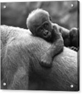 That's My Mommy Acrylic Print