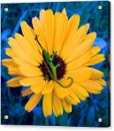 Imaginary Flower Acrylic Print