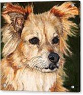 The Adventurous Dog Acrylic Print