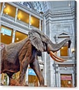 The African Bush Elephant In The Rotunda Of The National Museum Of Natural History Acrylic Print
