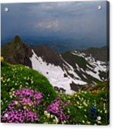 The Alps Wildflowers Acrylic Print