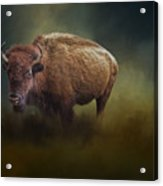 The American Bison Acrylic Print