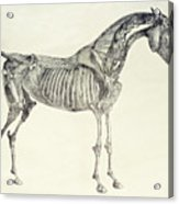 The Anatomy Of The Horse Acrylic Print by George Stubbs