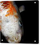 The Ancient One . Koi Fish . 7d5486 Acrylic Print