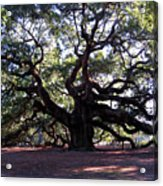 The Angel Oak In Charleston Sc Acrylic Print