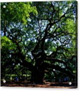 The Angel Oak In Summer Acrylic Print