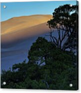 The Anthill Acrylic Print