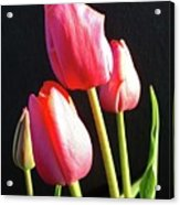 The Appearance Of Spring - Tulips Acrylic Print