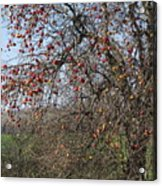 The Apple Tree Acrylic Print by Danielle Allard