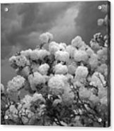 The Approaching Storm Acrylic Print
