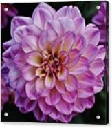The Art In Flowers 6 Acrylic Print