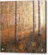 The Autumn Sun In The Birch Forest Acrylic Print