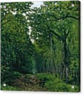 The Avenue Of Chestnut Trees Acrylic Print