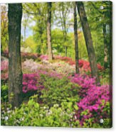 The Azalea Woodland Acrylic Print