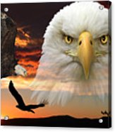 The Bald Eagle Acrylic Print