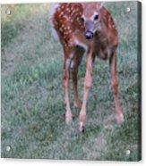 The Bambi Stance Acrylic Print