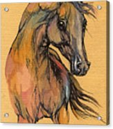 The Bay Arabian Horse 9 Acrylic Print