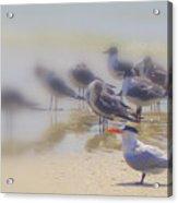 The Beak Acrylic Print