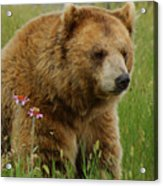 The Bear 1 Dry Brushed Acrylic Print