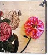 The Beauty Of A Dried Rose Acrylic Print