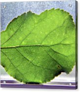The Beauty Of A Leaf Acrylic Print