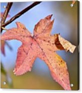 The Beauty Of Fall Acrylic Print