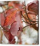 The Beauty Of Fall Acrylic Print