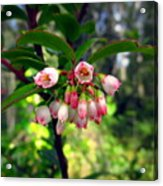 The Beauty Of Spring Acrylic Print