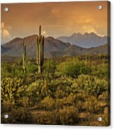 The Beauty Of The Sonoran Desert  Acrylic Print