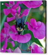 The Bee And The Flowers Acrylic Print