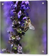 The Bee Hover Acrylic Print