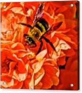 The Bee And The Flower Acrylic Print