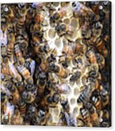 The Bees Hive It Acrylic Print