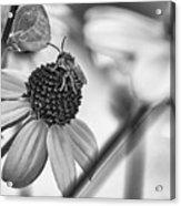 The Best Gardener - Bw Acrylic Print