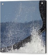 The Big Splash Acrylic Print