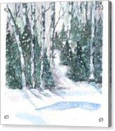 The Birch Trees Acrylic Print