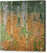 The Birch Wood Acrylic Print