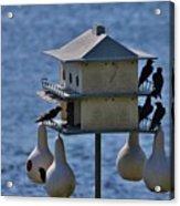 The Bird Hotel Acrylic Print