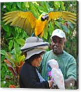 The Bird Lady At Ardastra Gardens Acrylic Print
