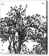 The Birds And The Tree Acrylic Print