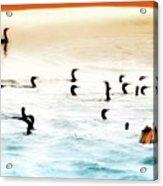 The Birds Santa Rosa Island Acrylic Print