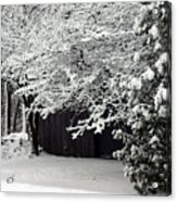 The Blizzard Is Over Acrylic Print