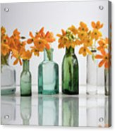 the Blooming yellow Ornithogalum Dubium in a transparent bottle instead vase Acrylic Print