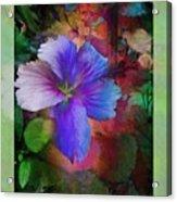 The Blue China Rose  Acrylic Print