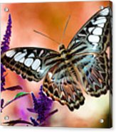 The Blue Clipper Acrylic Print by Lois Bryan