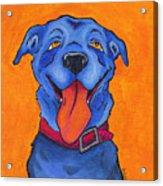 The Blue Dog Of Sandestin Acrylic Print