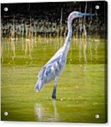 The Blue Fisherman Acrylic Print